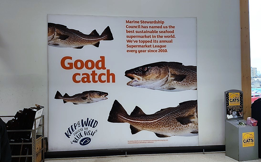 Sainsbury Good Catch.jpg